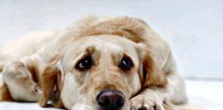 Descubre si tu perro sufre depresión